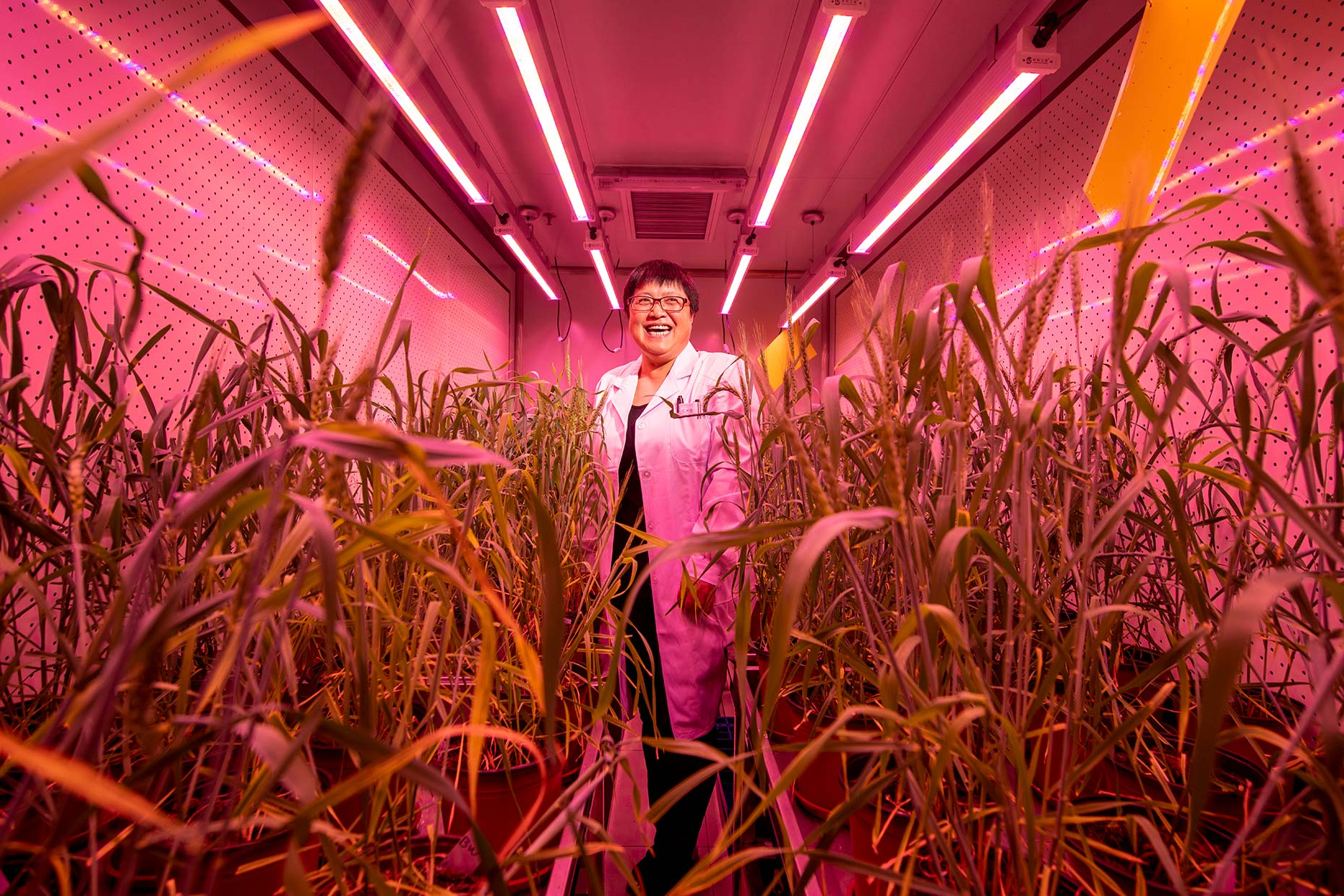 CRISPR China Beijing Stefen Chow Agriculture Science Gao Caixia